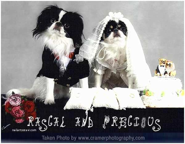 Dog Wedding Invitations is It Weird Weird Weddings Muttrimony A Dogs Wedding