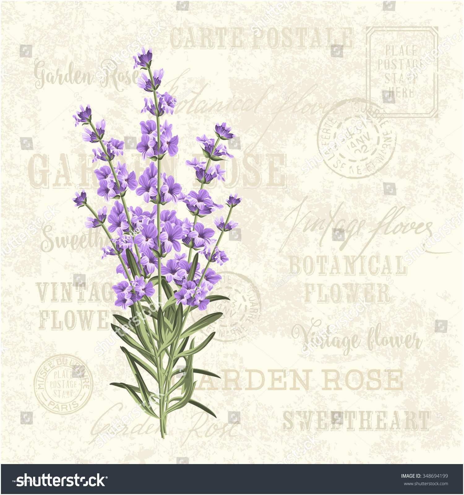 Postcard Wedding Invitations Template Lavender Elegant Card Vintage Postcard Background Stock